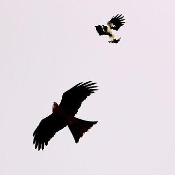 Fight in the skies by hartlandangel