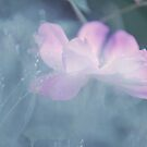 Whispering Wild Rose by JennyRainbow
