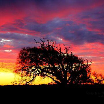 Beautiful dawn,Hartland  farm by hartlandangel