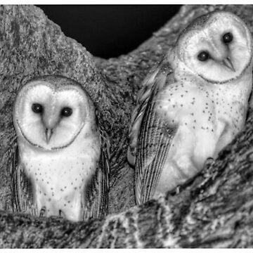 Baby barn owls by hartlandangel