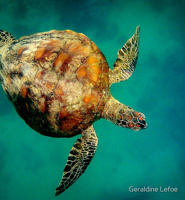 Whitsunday turtle by Geraldine Lefoe