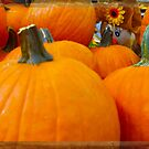 Hiding in the Pumpkin Patch by designingjudy