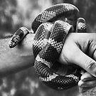 Snake Wrap! by Heather Friedman