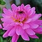 Pink is Beautiful by VJSheldon