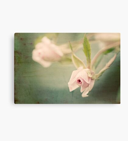 Tiny Roses Canvas Print