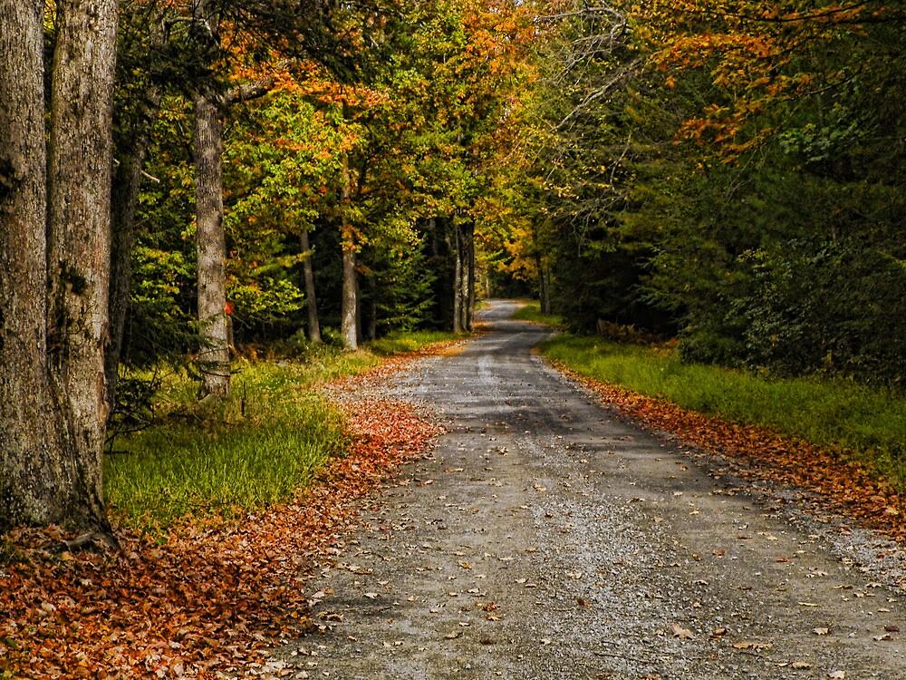 Summitville Mountain Road Autumn by PineSinger