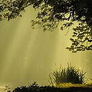 Sun Life by John Dunbar