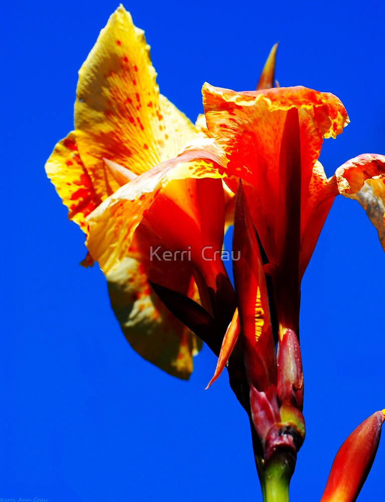 Orange Bloom by Kerri  Crau