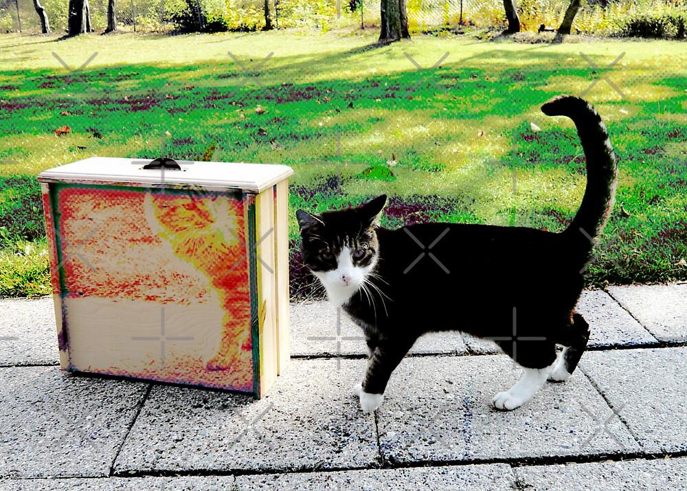 Two Cats by Hekla Hekla