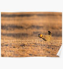 Golden Light On The Prairie Poster