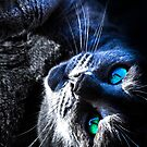 Russian Blue by LadyEloise