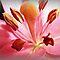 *Avatar/Macro -Gorgeous flower Cards*