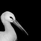White Stork by Stuart Robertson Reynolds