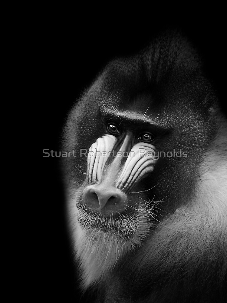 Mandrill by Sparky2000