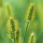 Wild Grass by Lynn Gedeon