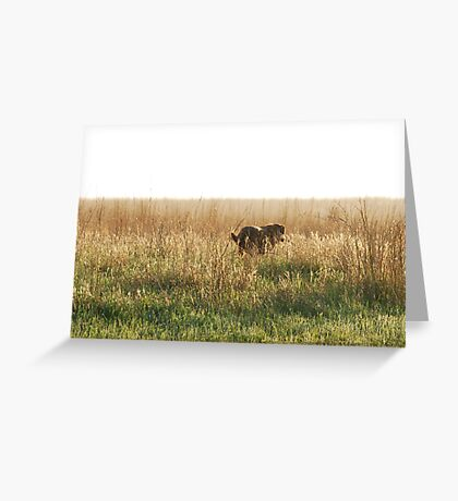 Lab in Field Greeting Card