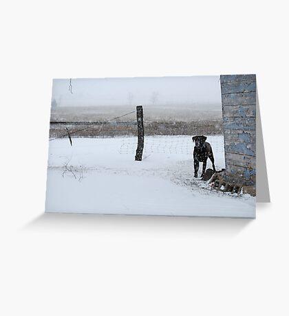 Snowy Labrador Retriever Greeting Card