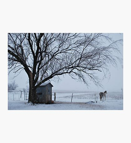Horse in Snowy Prairie Landscape Photographic Print