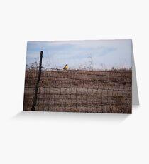 Meadowlark on Fence Greeting Card
