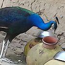 thirsty  by Awais Malik