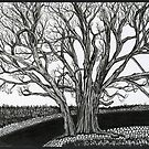 Solitary, Ink Tree Drawing by Danielle Scott