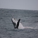 Humpback Whale Breaching Frame 2 by Kymbo