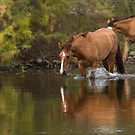 River Crossing by Sue  Cullumber