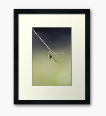 Hanging by a thread... Framed Print