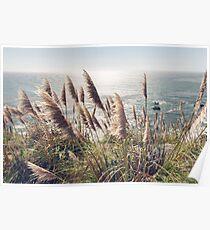 Reed, Wind & Ocean Poster