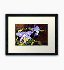 Pond orchids Framed Print