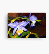 Pond orchids Canvas Print
