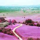 tuscan spring by Vin  Zzep