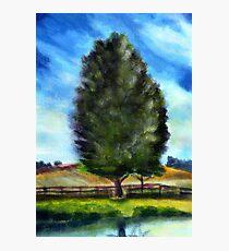 Tree - acryl Photographic Print