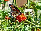 Monarch on Marigold by FrankieCat