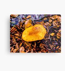 fungus, larger south. Metal Print