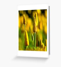 Unopened Yellow Poppy Greeting Card