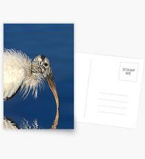 Endangered Woodstork Postcards