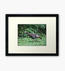 Milwaukee Wild Turkey Framed Print