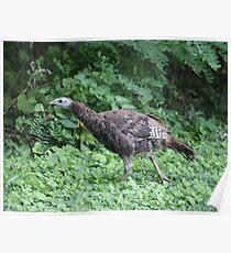 Milwaukee Wild Turkey Poster