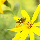 Little Butterfly on Bright Yellow Flower by Beverly Claire Kaiya