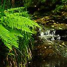 The Gorge - Pond by Karin Funke