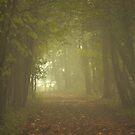 Illuminated Wood by Stephen J  Dowdell