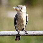 Blue Winged Kookaburra by cathywillett