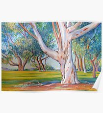 Gum Tree in the Park Poster