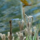 Blue & Amber by Kimberly Chadwick