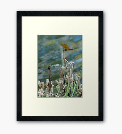 Blue & Amber Framed Print
