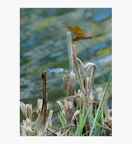 Blue & Amber Photographic Print
