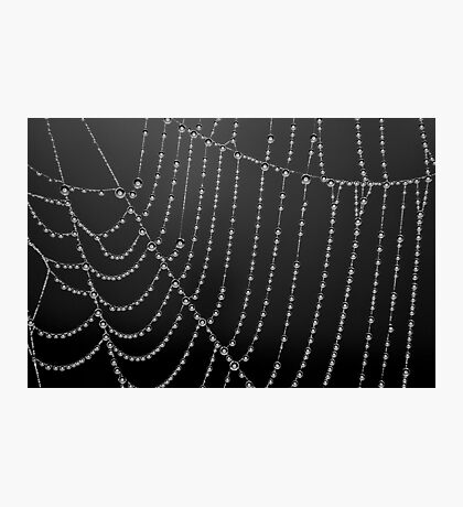 Dew Drops using a Ring Light [ PVL] Photographic Print