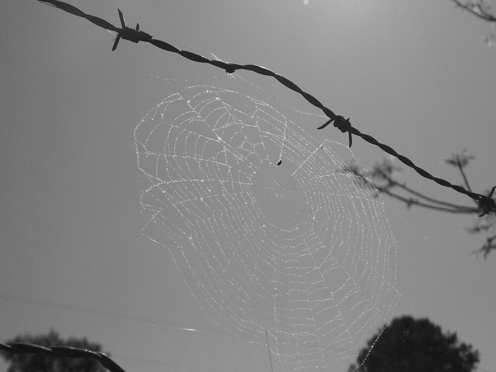 Charlotte's Web  by Jessica Whitfield