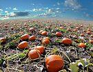 Pumpkin Planet by Igor Zenin